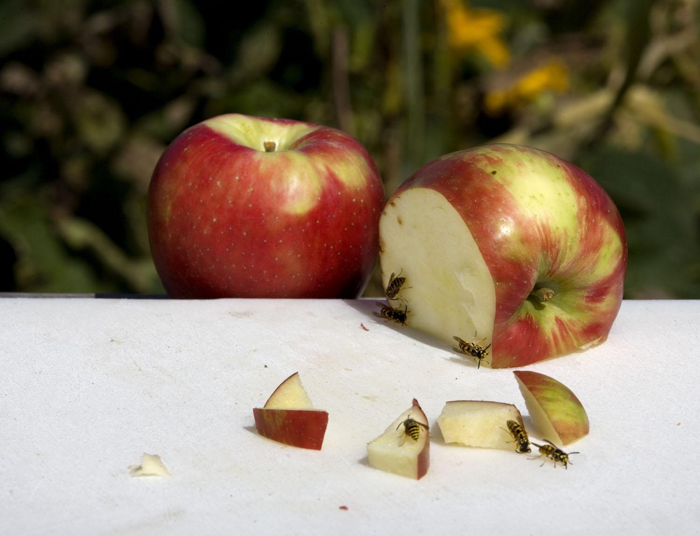 RE09-015.AppleBees