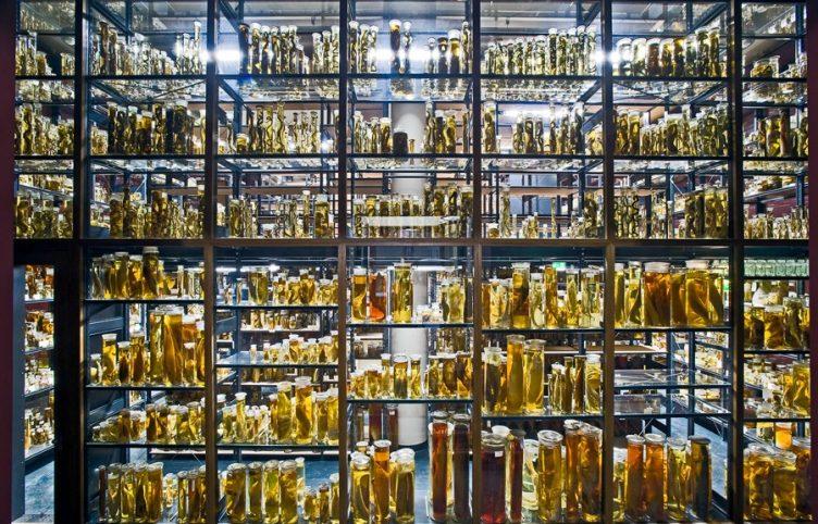 Museum für Naturkunde Berlin