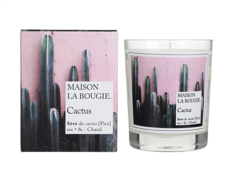 cactus-maison-la-bougie-001