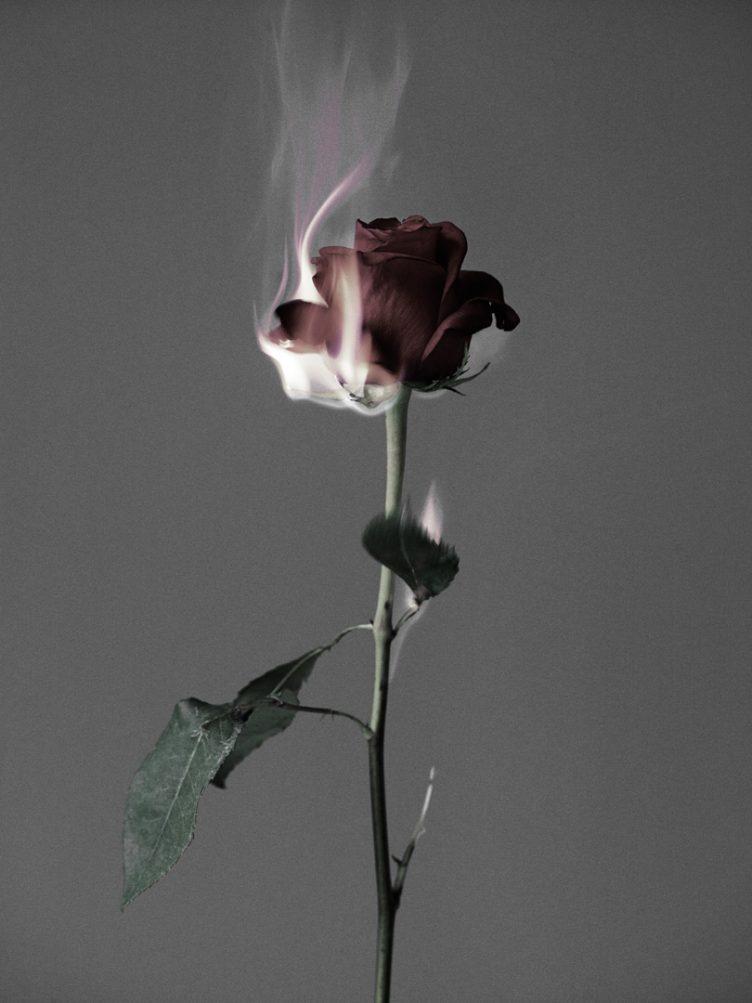 rasmus-mogensen-rose