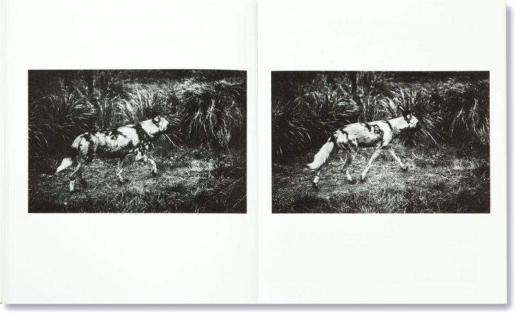 sofia-borges-the-swamp-017