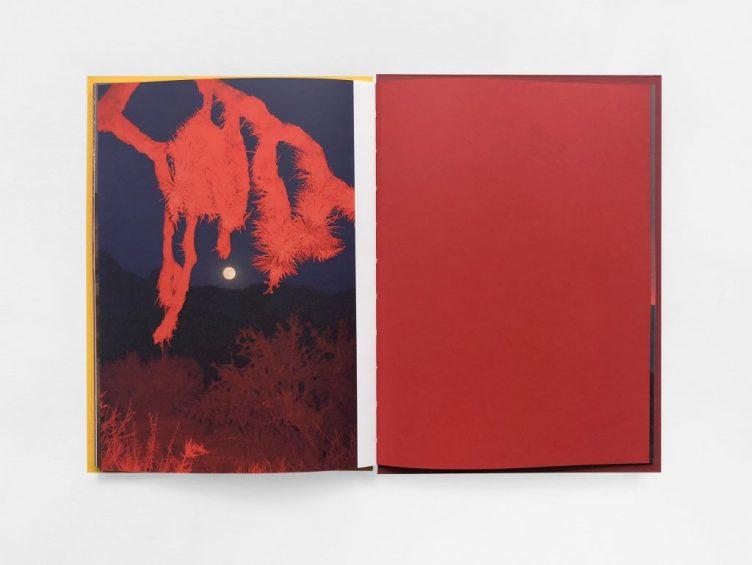 Red Orange By Delaney Allen 008